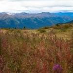 Spatzizi Plateau Wilderness Provincial Park